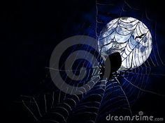 Spiderweb and big spider on dark background