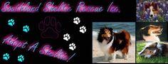 Adopt...adopt...adopt! Crazy Dog Lady, Adoption, Pets, Foster Care Adoption