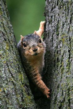 Veverička 8