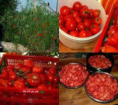 Tomakonyha: Az idei paradicsom projekt is elkezdődött... Automata, Vegetables, Recipes, Food, Essen, Vegetable Recipes, Meals, Ripped Recipes, Eten