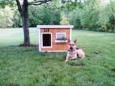 Zak - Ohio:  several years of being tried and tested, this dog house has been proven to be the most comfortable and the safest home you can build for your beloved dog.
