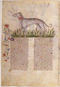 """""""Historia Plantarum"""" (""""About plants"""") is a natural science encyclopedia that contains the images of animals, plants and minerals with a description of their medicinal properties - in full accordance with the tradition of tacuina medievali (medieval medical reference), which manuscript owes its most famous name , """"Tacuinum sanitatis"""". The original of this work, """"Taqwim al-Sihhah"""" (""""Good health""""), was founded in the XI century Baghdad physician Ibn Butlanom"""