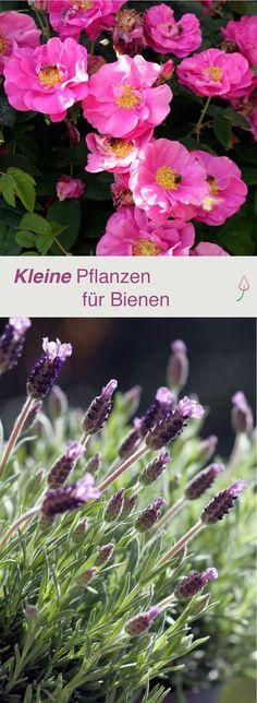 Kleine Pflanzen und Blumen für Bienen, die in jeden Garten oder Balkon passen.