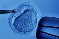 There is good news for couples wanting to start a family with the help of in vitro fertilisation (IVF). A technique Taiwanese researchers have developed could facilitate selection of the most viable embryos to implant, lead to higher IVF success rates and ultimately lower its cost.