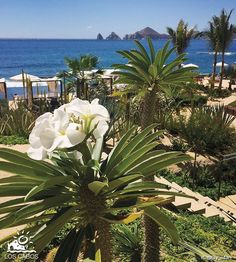 Los Cabos is an outstanding place blessed by nature. Seeing the combination of the desert vegetation and the ocean, is a spectacular sight that you must experience. http://visitloscabos.travel/ - #Nature #Cabo #LosCabos #Travel