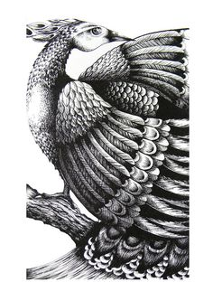 Bird Ink Drawing by Amanda Colville- possible print design?