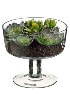 "Succulent Garden 6.2"" in Glass Vase Green Burgundy"