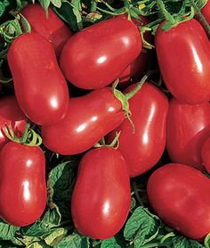 "Tomato, Roma VF - The classic sauce and paste tomato. Compact 30"" to 36"" plants  produce paste-type 2-oz. tomatoes resistant to Verticillium and Fusarium wilts. Meaty interiors and few seeds. My wife's favorite in just about everything.  Burpee suggests: Fertilize when first fruits form to increase yield. Water deeply once a week during very dry weather."