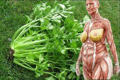 Kto ju používa, nemusí sa bávať kíl navyše, vysokého krvného tlaku ani slabej imunity. Zelerová vňať by v žiadnom prípade nemala skončiť v odpadkovom koši. Obsahuje totiž cenné látky ako vitamín C, kyselinu listovú a …