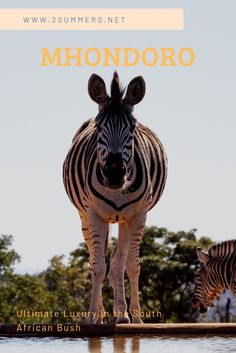 Luxury travel option abound in South Africa. If you're looking for a luxury experience in the bush, you can't get much better than Mhondoro Safari Lodge. Parasailing, Game Reserve, Snorkeling, Luxury Travel, Travel Around, Trekking, Adventure Travel, South Africa, Safari