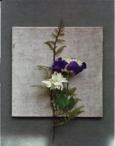 A high-contrast still life uses imported 'Spark Velde' carnation and lisianthus in double petals of purple and green set against the armature of a domestically grown ghost fern.