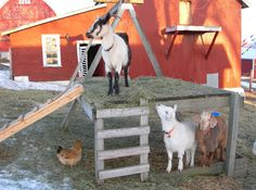play area for the petting zoo kids