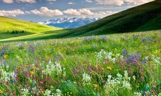 With the Wallowa Mountains in the distance, a tapestry of wildflowers covers the Zumwalt Prairie in Eastern Oregon. Description from pinterest.com. I searched for this on bing.com/images