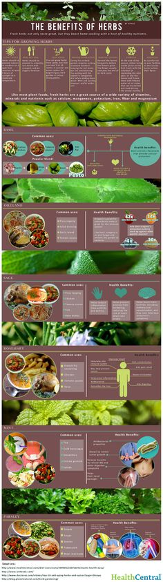 My infographic creation on the health benefits and cooking uses of herbs.