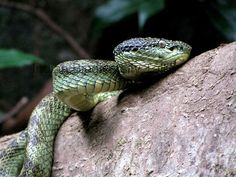 Yangoupokpi-Lokchao Wildlife Sanctuary in Manipur, India