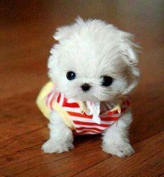 soooooooooo cute~