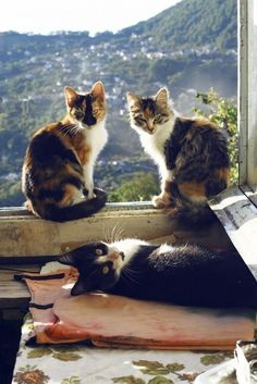 Kitty on the window .. X ღɱɧღ   