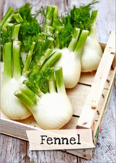 Want to learn more about fennel? Sign up for Jamie Oliver's Kitchen Garden Project at http://www.jamieskitchengarden.org/!