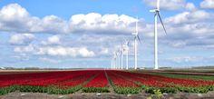 Bloemen in de Polder by Gerard de Bruijn