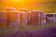 September may be National Honey Month, but we all know that there would be no honey without the hard-working honey bees! In today's world, the honey industry faces many challenges such as hive loss, drought, colony collapse and shrinking forage areas. Here are just a few ways you can help contribute to the welfare and survival of the honey bees.