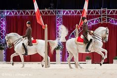 Two Lippizaner horses during a show of the Spanish Riding School at Ahoy Rotterdam Lippizaner, Beautiful Horses, Animals Beautiful, Horse Spirit Animal, Lipizzan, Spanish Riding School, Kittens Playing, White Horses, Horse Pictures