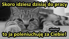 Jokes, Humor, Animals, Animales, Husky Jokes, Animaux, Humour, Memes, Funny Photos