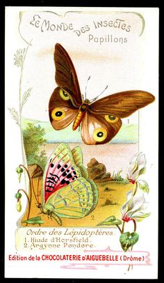 All sizes   French Tradecard - Butterflies & Moths #18   Flickr - Photo Sharing!
