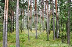 The forests in Finland are pretty interesting,they are right near the road and in some places you can see raindeers.