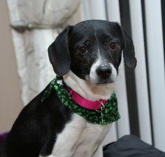 Willow is an adoptable Pointer Dog in Madison Heights, MI. Hi there! My name is Willow and I am so very glad that you stopped by to visit my page! Please let me share a little bit about myself so that...