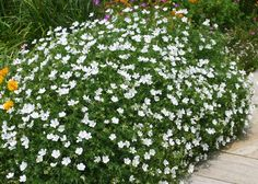 backyard designs – Gardening Ideas, Tips & Techniques Green Garden, Herb Garden, Garden Beds, Backyard, Patio, Green Flowers, Flower Beds, Big Dogs, Four Seasons