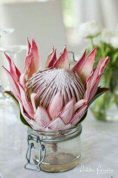 Points You Should Know Prior To Obtaining Bouquets South African Wedding: Pink Protea Floral Decor. Protea Art, Protea Flower, Protea Wedding, Wedding Flowers, Boho Wedding, African Christmas, South African Weddings, Country Style Wedding, Flower Art