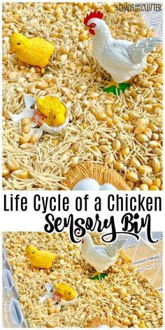 Kids can explore with their senses in this Life Cycle of a Chicken Sensory Bin. Perhaps they will discover which came first, the chicken or the egg! Sensory Bins, Sensory Play, Sensory Table, Sensory Activities, Preschool Activities, Motor Activities, Indoor Activities, Sea Turtle Life Cycle, Writing Prompts For Kids