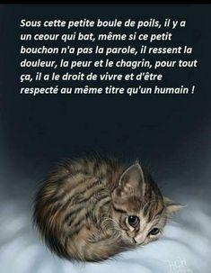 Poeme Pour Mon Chat Que J'aime : poeme, j'aime, Idées, Animaux, Animaux,, Photo, Mignons