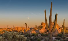 Arizona Highways: January 12, 2017The moon rises over saguaros and boulders in Pinal County south of Phoenix. Photo By: Jack Jackson