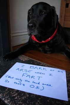 I bark at my arse when I fart (but only the loud ones.  So that's o.k.)
