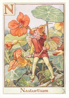 The nasturtium fairy - Fata del nasturzio; Cicely Mary Barker