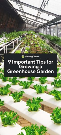A greenhouse has many good benefits, but to use it optimally we share with you nine important tips to consider when growing a greenhouse garden.