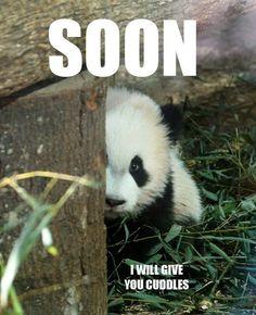 Because I'm Amanda Panda.