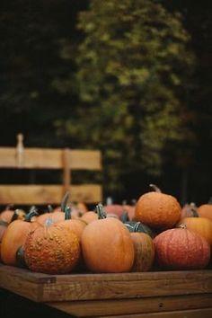 October Country, Pumpkin Farm, Mabon, Samhain, Autumn Cozy, Happy Fall Y'all, Best Seasons, Autumn Inspiration, Color Inspiration