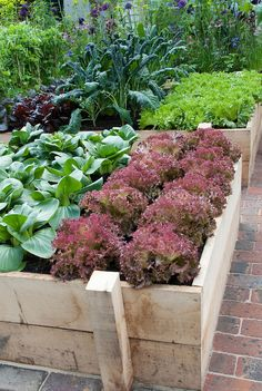 Raised+Vegetable+Beds | Vegetable Garden with Lettuces | Plant & Flower Stock Photography ...