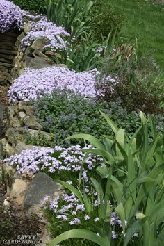 Evergreen Groundcover Plants: 20 Choices for Year-round Interest - creeping phlox Small Yard Landscaping, Inexpensive Landscaping, Mulch Landscaping, Landscaping With Rocks, Landscaping Ideas, Ground Cover Plants, Rock Garden Plants, Shade Garden, Gardens