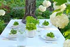 Potted herbs make pretty centerpieces for rustic weddings