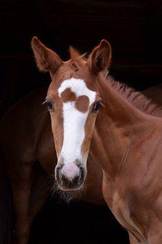 horse /   Whimsical by Elizabeth Webb