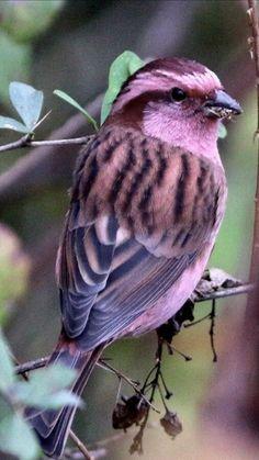 Pretty Birds, Love Birds, Beautiful Birds, Pink Daisy, Backyard Birds, Animal Wallpaper, Bird Feathers, Wiccan, Pup