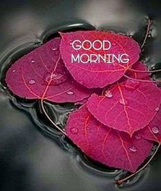 Good Morning Romantic, Good Morning Beautiful Pictures, Good Morning Images Flowers, Good Morning Prayer, Good Morning Images Hd, Good Morning Picture, Good Morning Messages, Good Morning Good Night, Good Morning Wishes