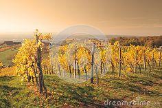 Photo about Autumn vineyard at Klöchberg, Austria. Image of austria, klapara, foliage - 73918138 Austria, Vineyard, Stock Photos, Autumn, Mountains, Nature, Photography, Travel, Outdoor
