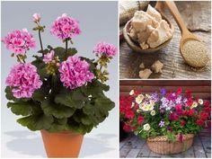 I Am Organic Gardening Product Organic Gardening, Gardening Tips, Indoor Plants, Planting Flowers, Orchids, Kustom, Vegetables, Outdoor, Gardening