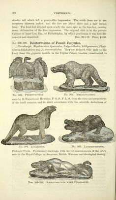 Catalogue of casts of fossils, - Biodiversity Heritage Library