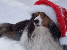 Santa Paws by shetlandshake