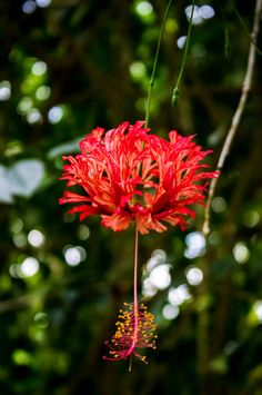 Rainforest Flower's by mnewman1979 on 500px